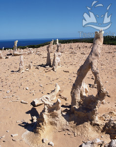 king island calcified forest