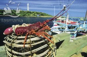king island lobster