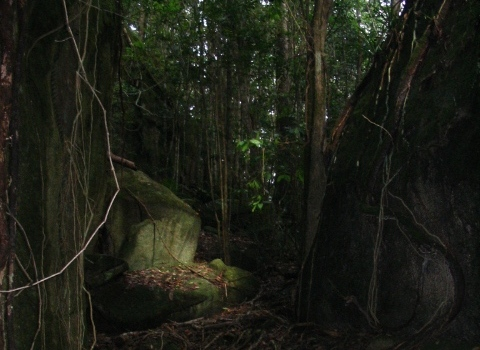mt spec rainforest